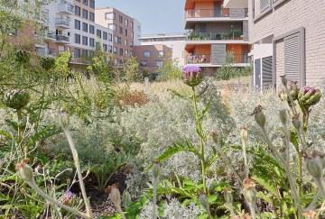 Jardins familiaux Sainte-Geneviève